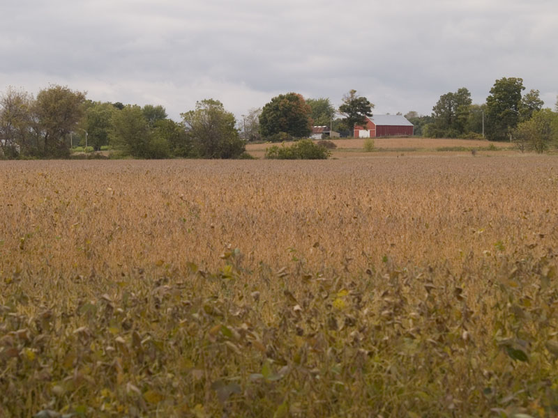 Wisconsin Soybeans